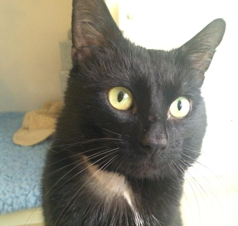 Boris - former stray - black  (1)