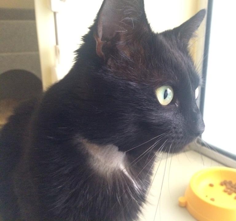 Boris - former stray - black  (4)