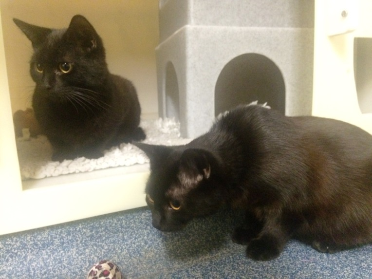 Sooty and Squeek (15)