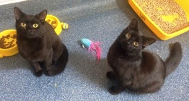 Sooty and Squeek (27)
